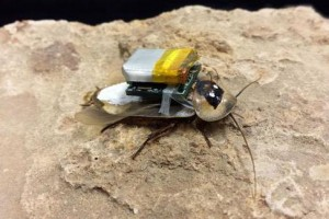 Remote-controlled-search-and-rescue-roaches-are-coming