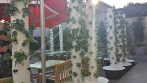 aeroponic-towers-550x309 (1)