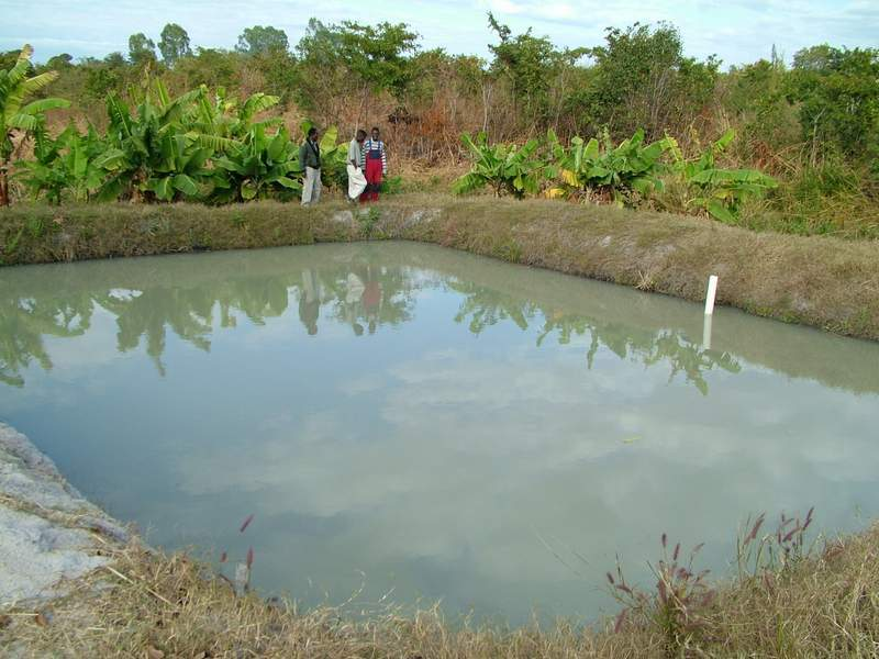 60 dead in war over fish pond in benue information nigeria for Farm pond maintenance