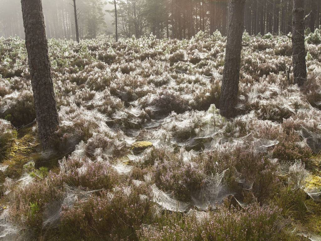 It S Reportedly Raining Spiders In Australia Information