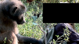 baboon-have-sex-with-woman (1)