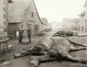 The other casualties: Troops string wire past four German artillery horses that were killed along with five German soldiers in this street