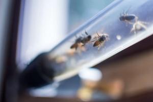 beecosystem-beehive-3@2x