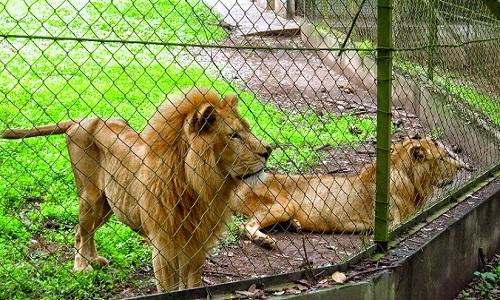 Image result for adu bako zoo