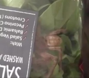Australian-woman-finds-spider-in-salad-package