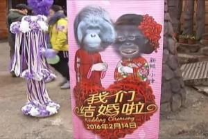 Chinese-zoo-hosts-Valentines-wedding-for-orangutans