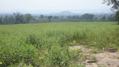 1000557224_4_644x461_1-hectare-farm-land-in-kwali-abuja-payable-in-installments-over-12mnth-real-estate_rev020