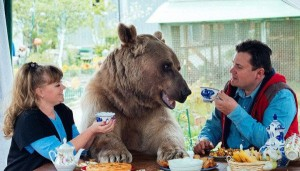 Stepan-the-bear-600x341