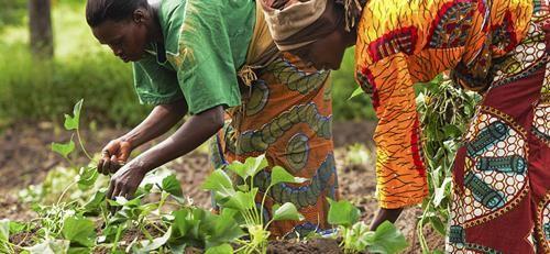 25799-ffebfd-female-farmers