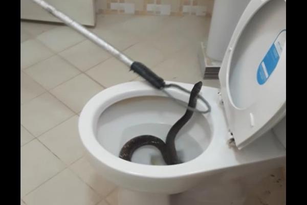 snake toilet