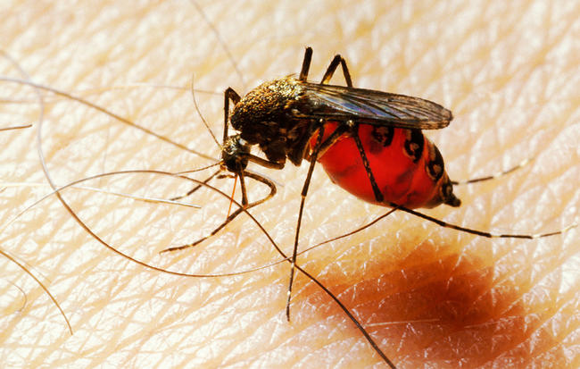 'Allow Mosquitoes Bite You, They Need Blood To Feed Their Kids' – Animal-Rights Activist