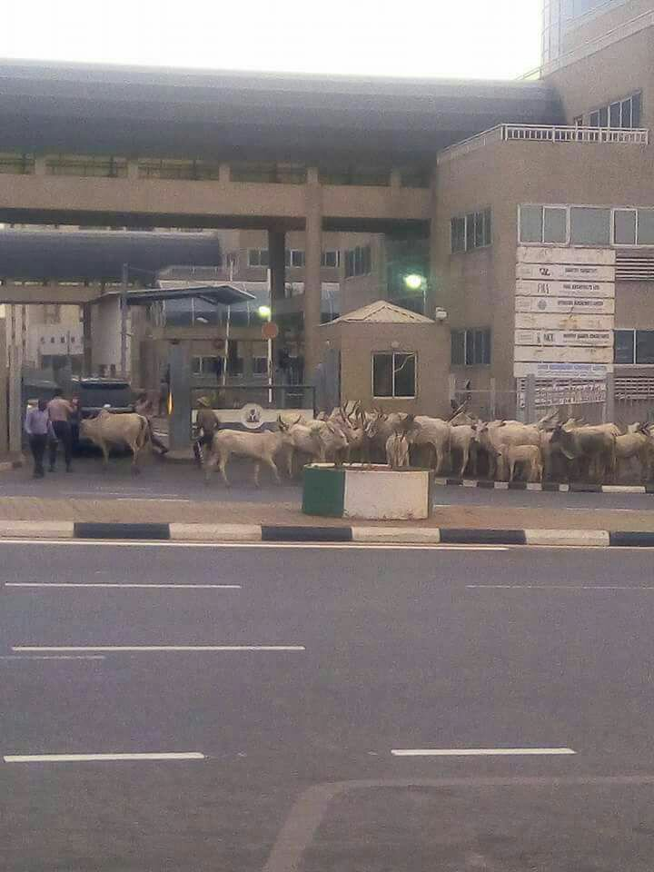 Is This What Buhari Has Turned Nigeria Into? (Photo)