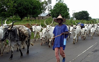 herdsmen attacks miyetti allah reveals those allegedly responsible for killings of farmers - Give Us Its Sambisa Forest For Grazing — Miyetti Allah