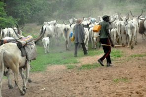 Address herdsmen activities or expect retaliation - Aare Onakakanfo Council