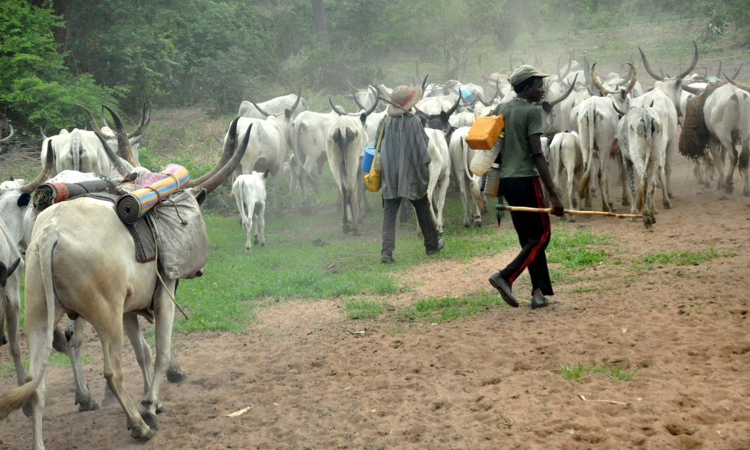 drama as farmer attacks herdsman cuts off his hand in ilorin - Address herdsmen activities or expect retaliation – Aare Onakakanfo Council