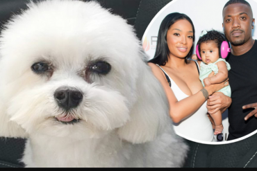 '$20k reward for anyone who finds our dog' - Ray J and wife Princess love announce their dog has been stolen