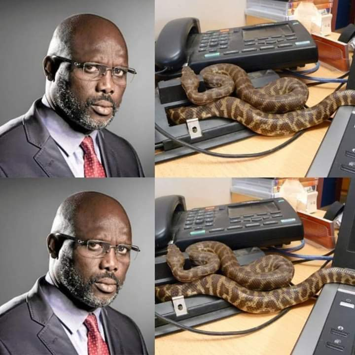 Drama As Snake Chases George Weah Out Of Office
