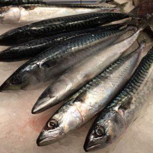 "titus 300x300 - Video: ""Why You Won't Make Heaven If You Eat Titus Fish"" – Pastor"