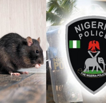 Rat Ate Baby's Ear At Onitsha