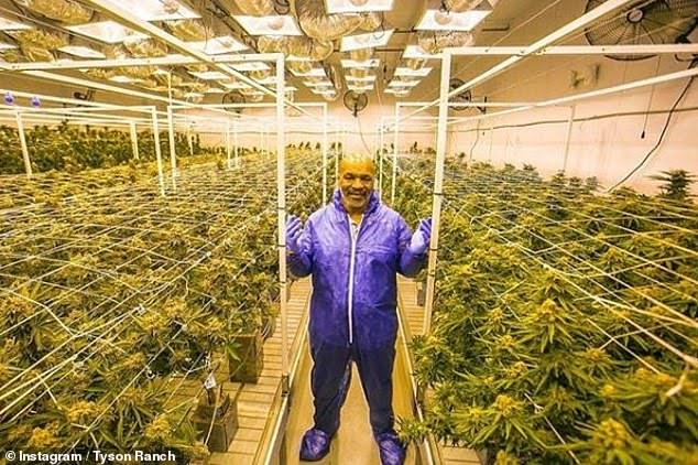 Mike Tyson and his cannabis ranch