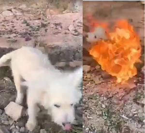Nigerian Man Set His Dog On Fire For The Fun Of It (Photos)