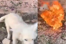 Man allegedly burnt his dog alive