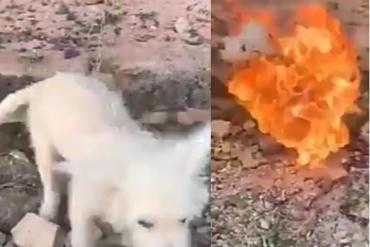 Man allegedly burnt his dog alive
