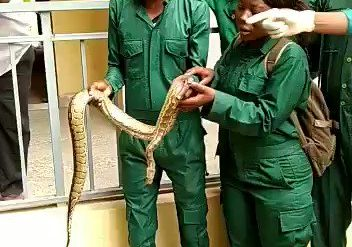 UNIMAID Lecturer Insists Students Must Hold Live Snake To Pass Exam