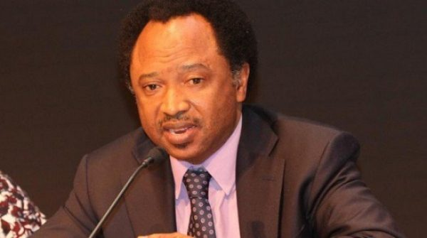 Ask Sunday Igboho For Help In Fighting Boko Haram: Shehu Sani