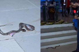 Snake attacks RCCG Pastor in Lagos