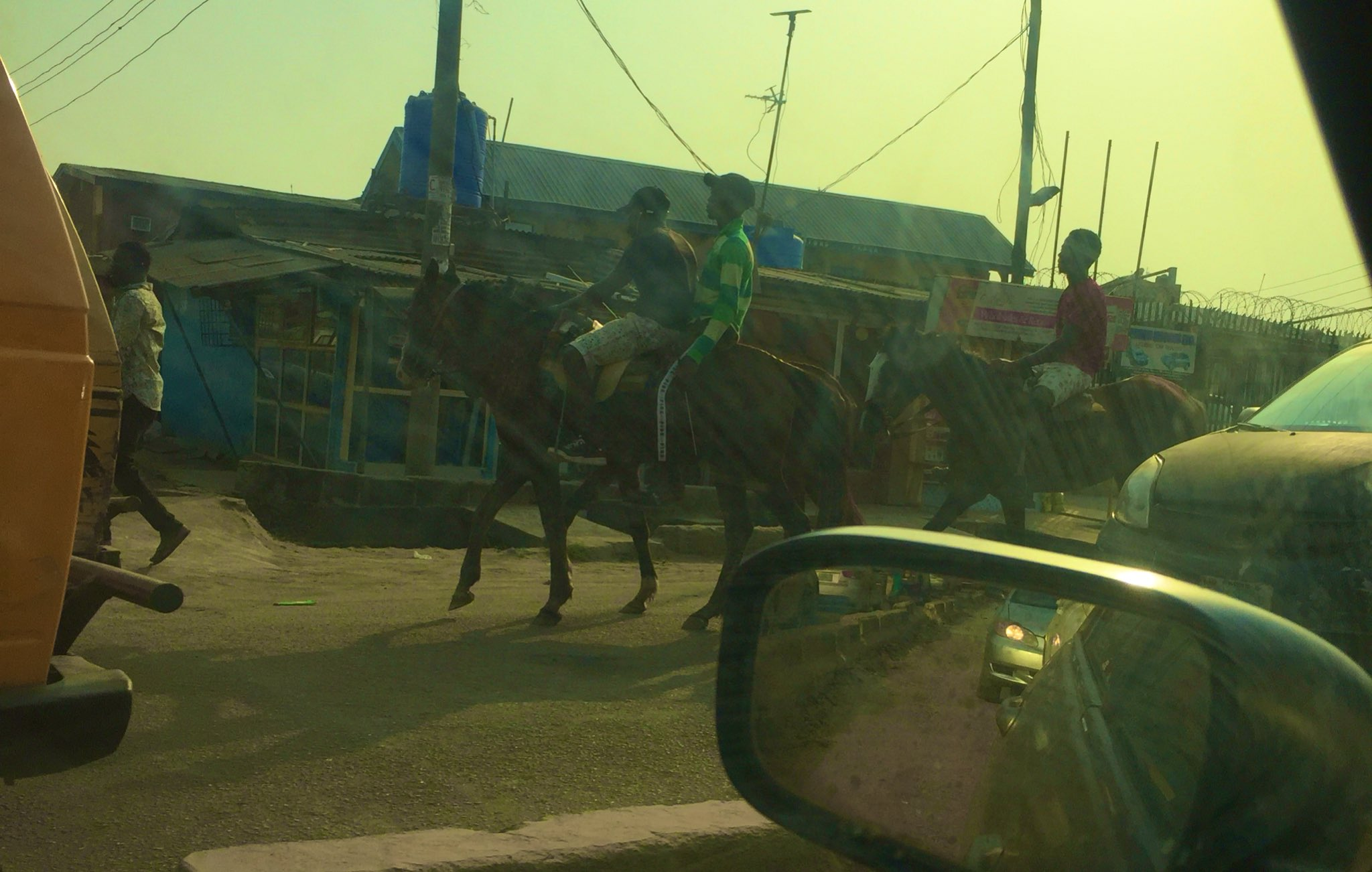 The horses transporting passengers