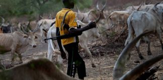 Miyetti Allah Backs Obiano Order Declaring AK-47-Carrying Herdsmen Criminals