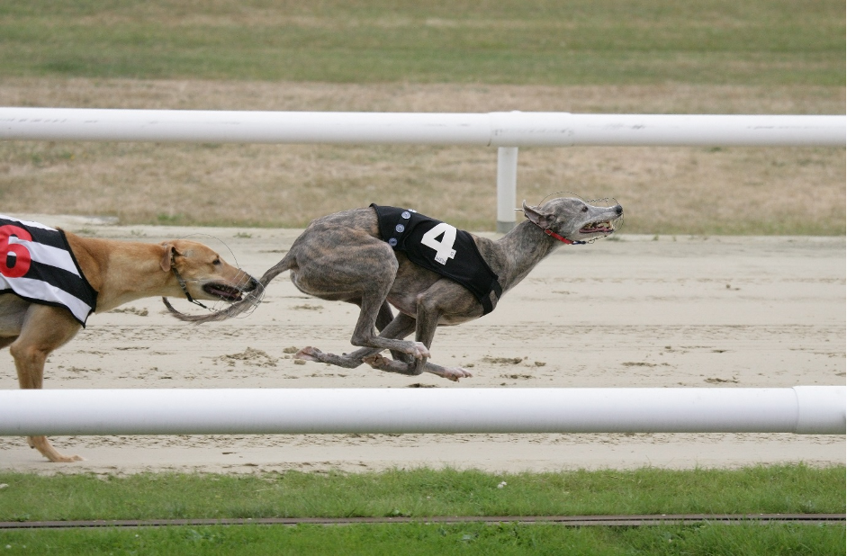 Greyhound racing: The last five winners of the Steel City Cup